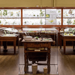 Glass Flowers Virtual Tours  – The Ware Collection of Blaschka Glass Models of Plants