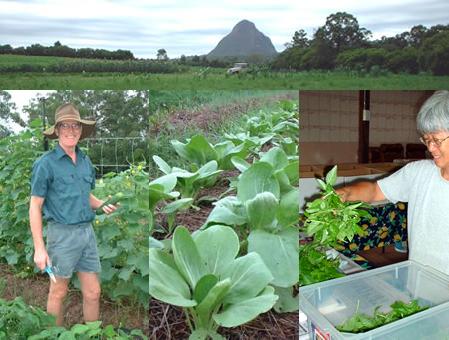 Fresh Organic Vegetables from Sandy Creek Organic Farm