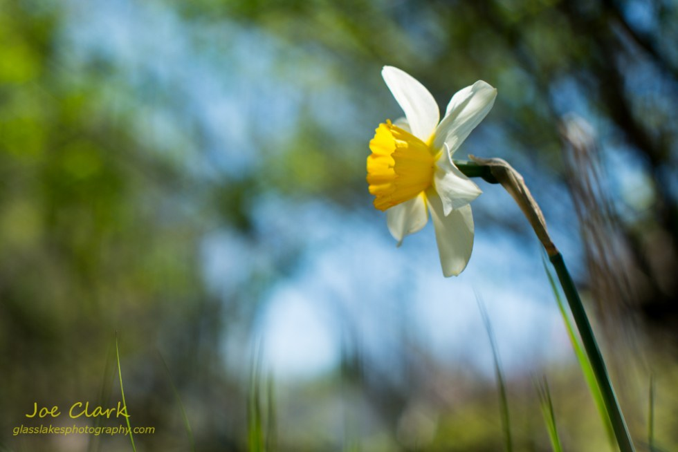 Spring Flower by Joe Clark www.glasslakesphotography.com