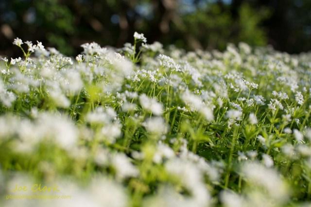 Field of Pettels by Joe Clark www.glasslakesphotography.com