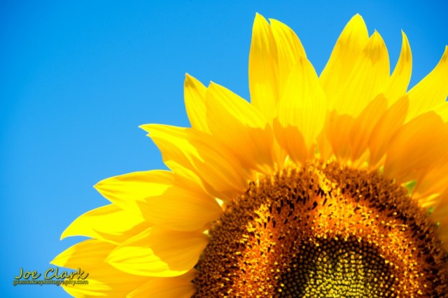 Sunny Days by Joe Clark www.glasslakesphotography.com