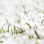 Snow in the grass spring Joe Clark Photographer