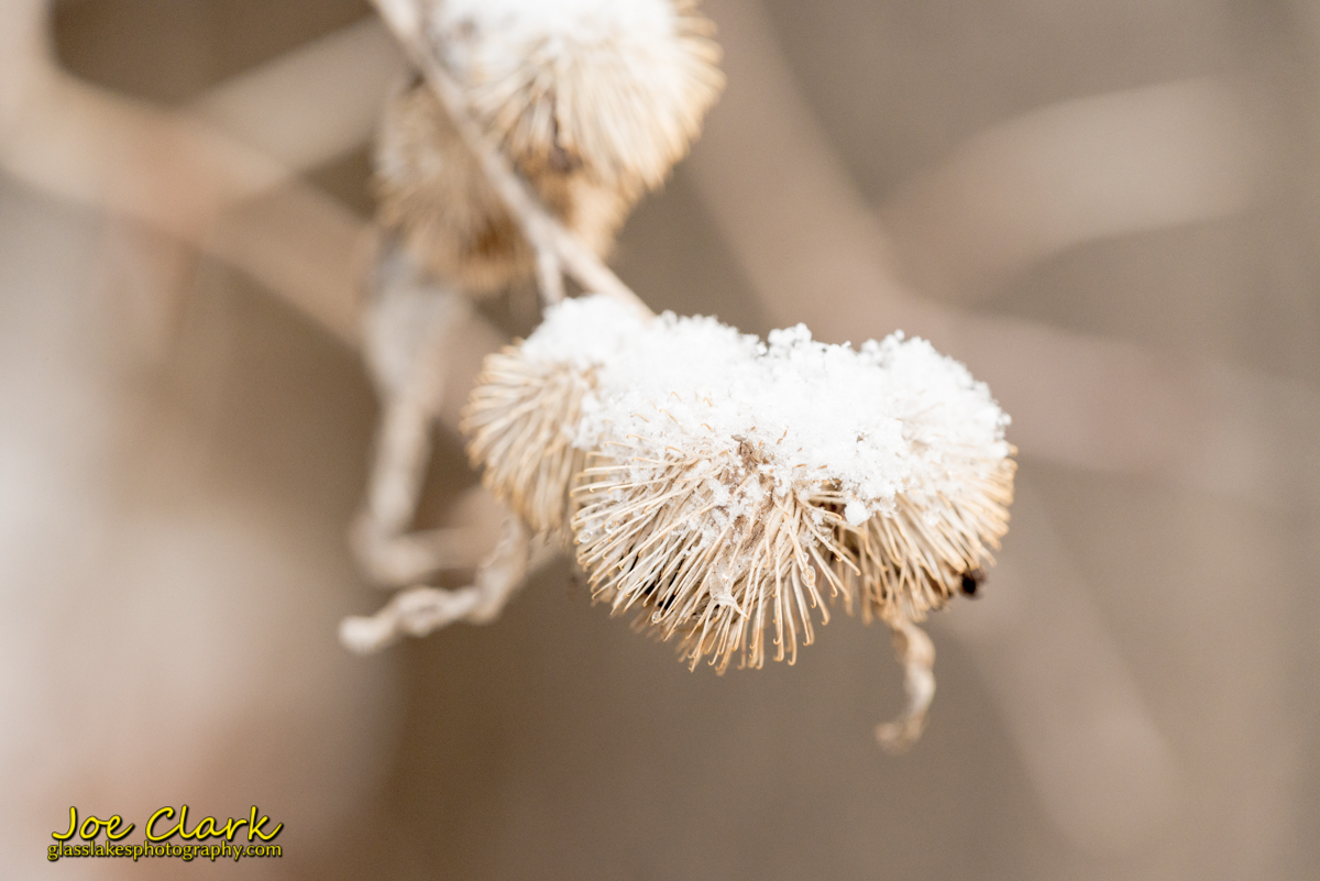 Spring snow on seed pod Joe Clark Photographer