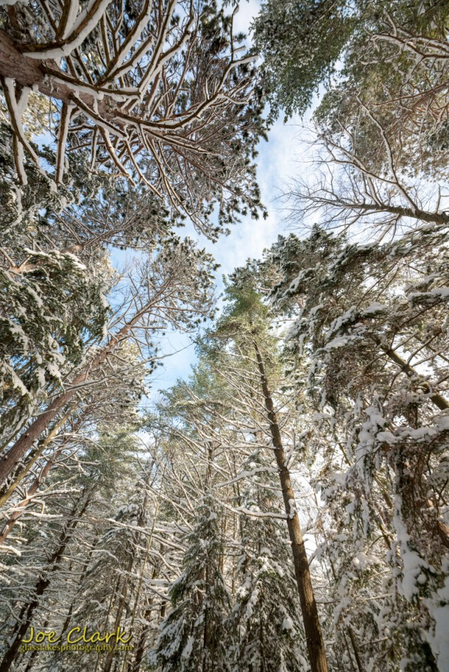 A Walk in the woods by Joe Clark Petoskey Northern Michigan Photography