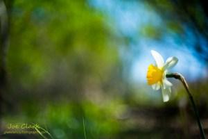 Daisy, from the Botannical photography by Joe Clark.