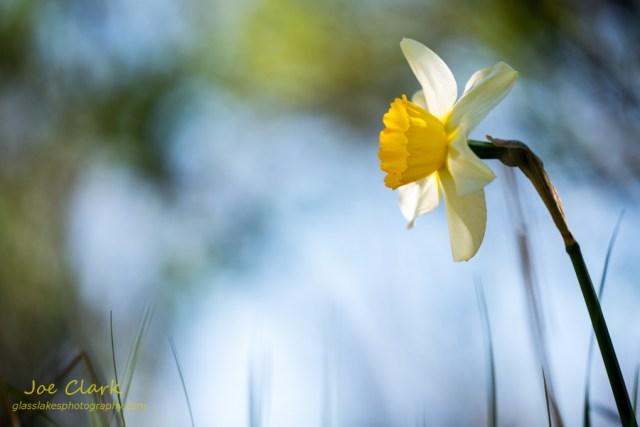Springtime. By Joe Clark.