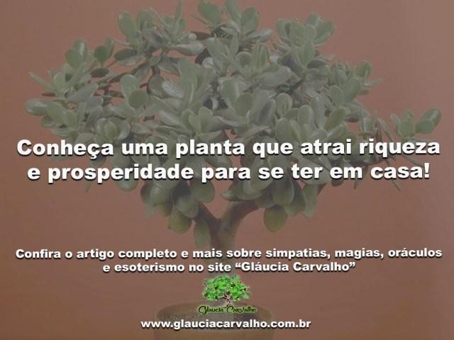 Conheça uma planta que atrai riqueza e prosperidade para se ter em casa!