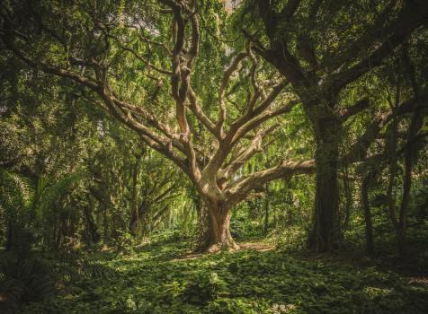 The Hiding Tree – Secret Revealed Part – 1