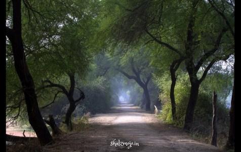Postcards from Bharatpur Bird Sanctuary – GuestPost by Shalzmojo