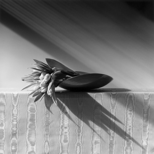 Robert Mapplethorpe, Tulipani, 1987