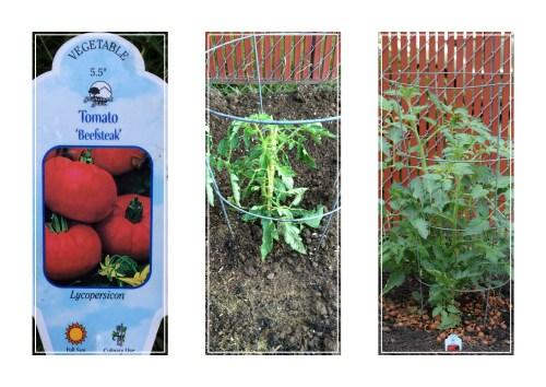 TomatoNo1