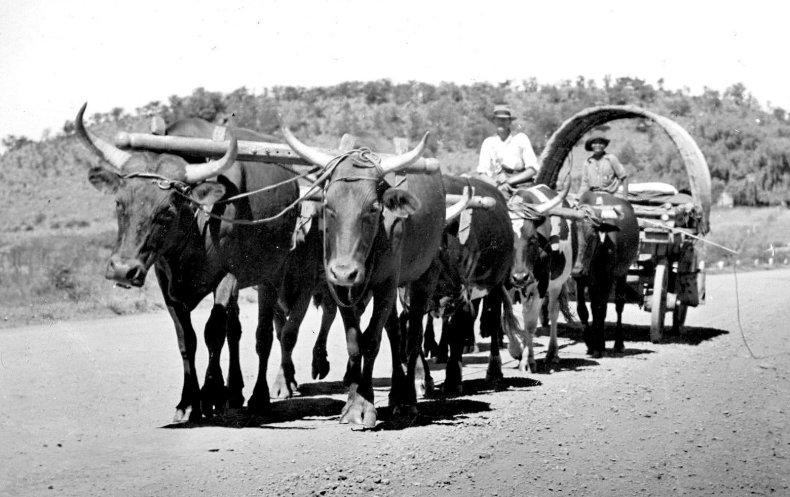 Voortrekker Ox Wagon