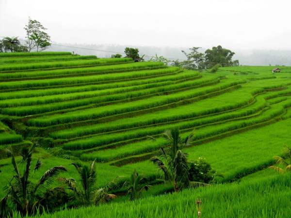 Travel-to-Bali-landscape-rice-terraces-Glimpses-of-The-World