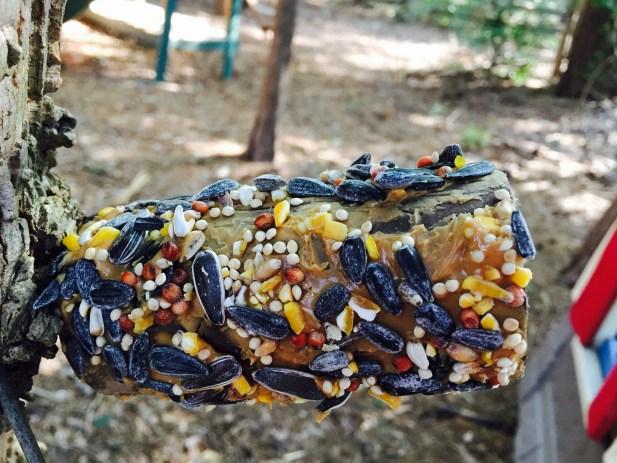 DIY Bird Feeder Craft for Kids