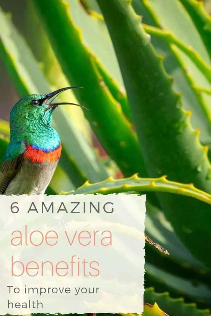 6 amazing aloe vera benefits to improve your health