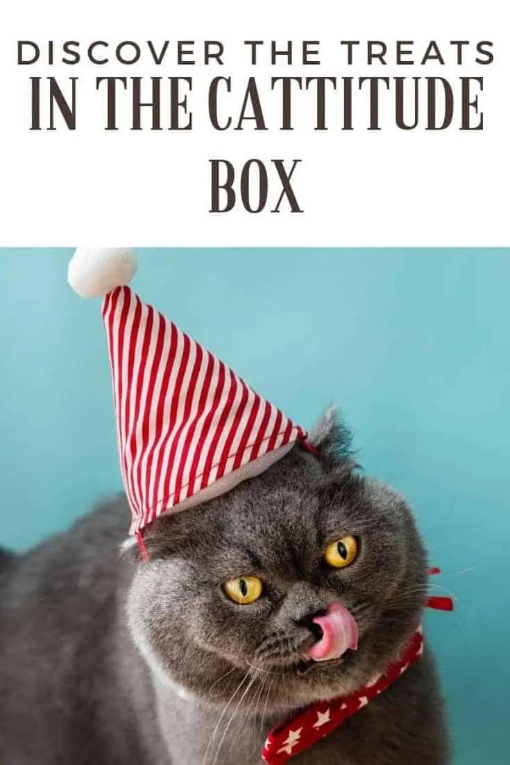 discover the treats in the cattitude box