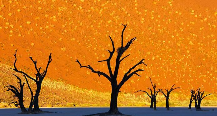 Dead Trees Park, Deadvlei, Namibia
