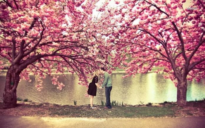 Kissing Under A Cherry Blossom Tree