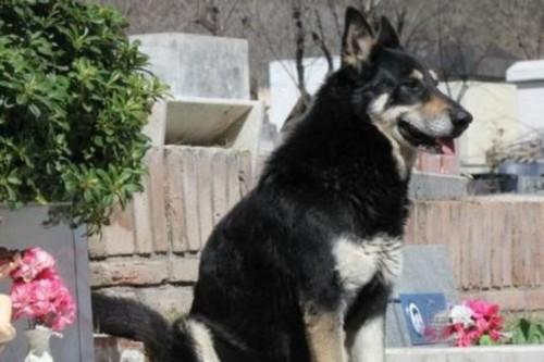 Captain - Most Famous Dogs