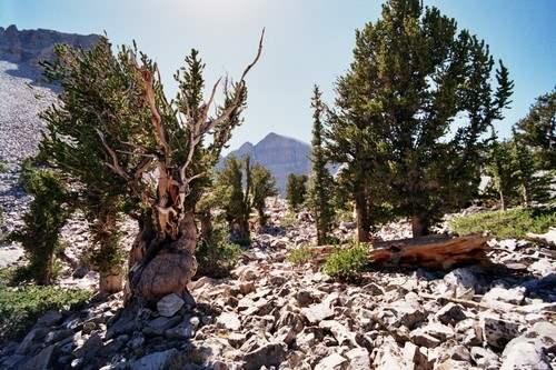 Prometheus Popular Trees