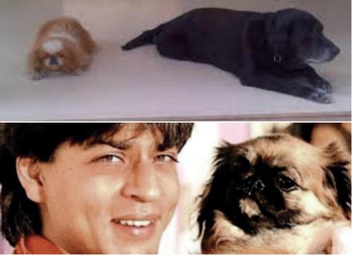 Shah Rukh Khan with dog
