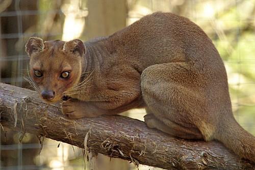 10 Little-Known Animals