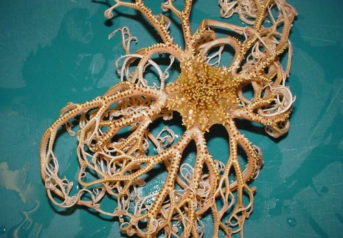 Alien sea creature with 100 arms
