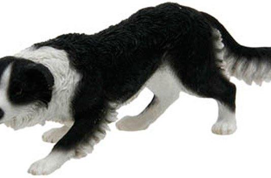Cumberland Sheepdog