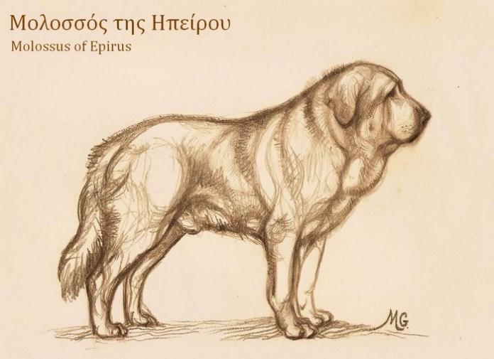 Molossus of Epirus