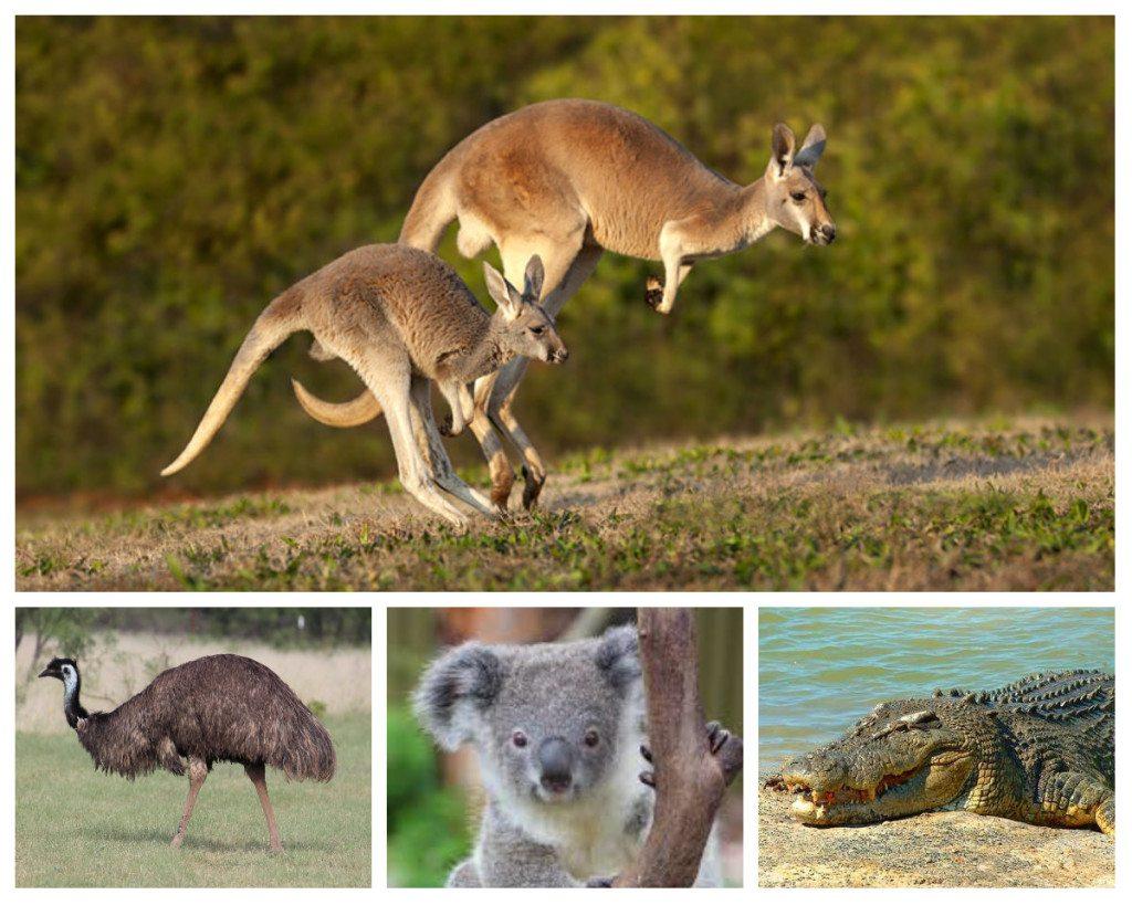 Floura And Fana Australia