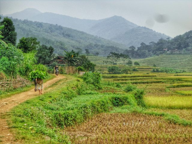 rice terraces of Pu Luong national park