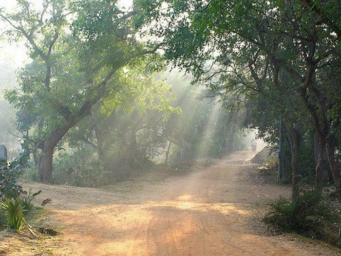 Tree lined tracks around Auroville