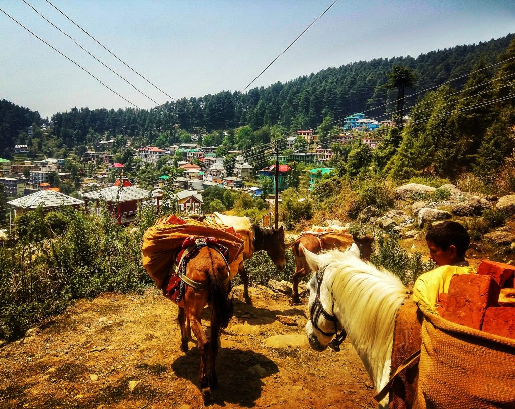 As there are no roads in Dharamkot donkeys have to be used to carry all supplies