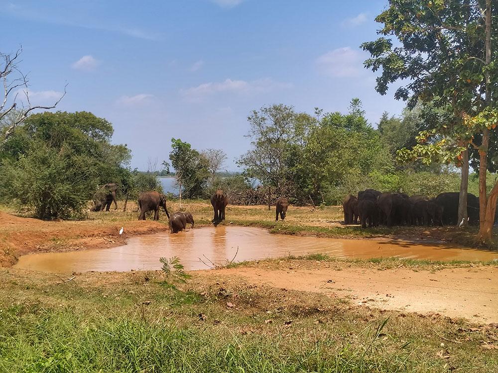 elephant transit home sri lanka