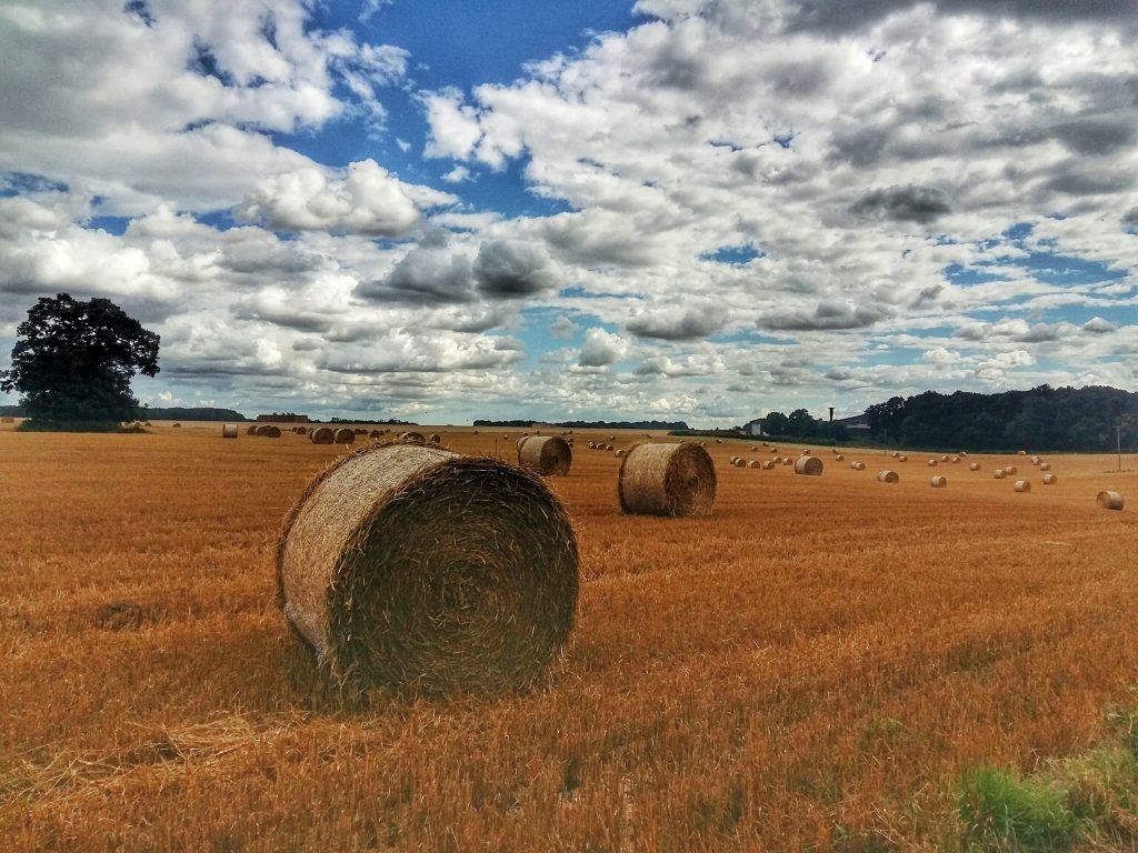 suffolk fields