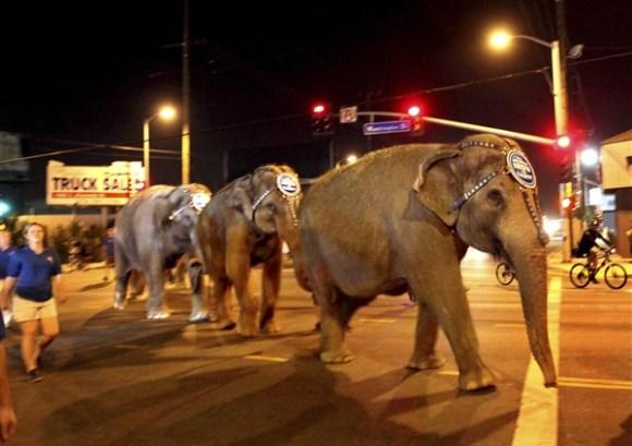 Ringling Brothers Elephants