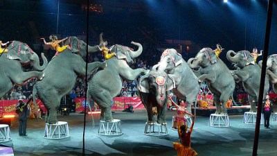 China protests animal circus, angry over the use of endangered and exotic animals.