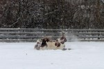 amado the horse in snow