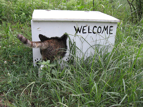 New York City Architects have banded together to provide the metropolis' feral cats with places of refuge. Photo credit: Kathy Doucette via flickr