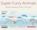 Super furry animals infographic