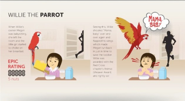 parrot infographic