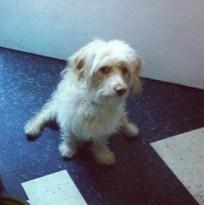 Lena Dunham adopted pet dog