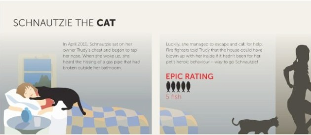 lifesaving cat infographic