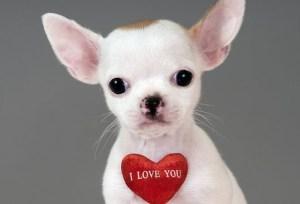 Be My Valentine! Photo Credit: news.com.au