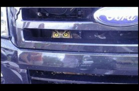 A Florida wildlife officer took this picture of a great horned owl stuck in the grille of an SUV. Photo Credit: Florida Fish and Wildlife Conservation Commission