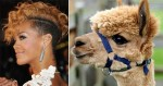 Rihanna And Alpaca