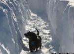 Dachshund in snow