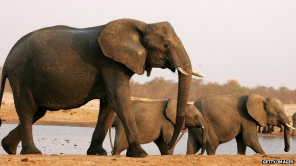 Environmental campaigners have asked Google to stop advertisements in Japan that sell ivory products.