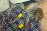 Shelter Dog attacked