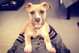 Jersey Shore star adopts pit bull puppy